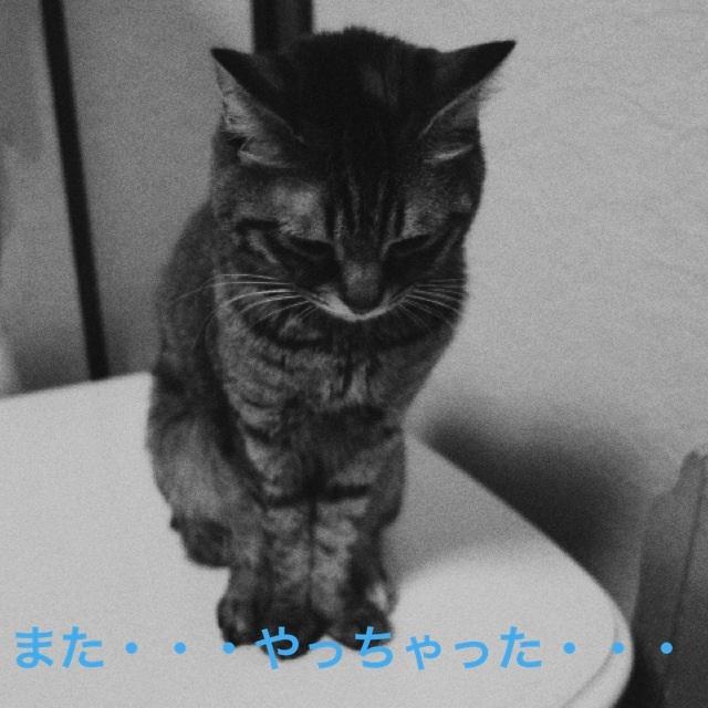20140326220708b31.jpg