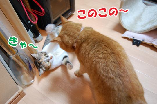 20140707b.jpg