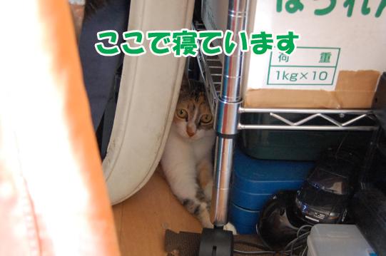 20140708b.jpg