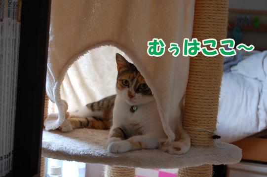 20140718b.jpg