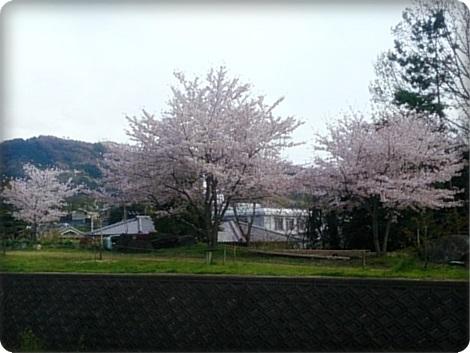0406桜
