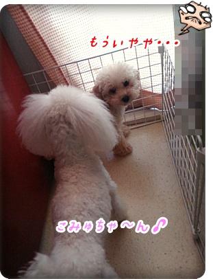 0702花梨&こみゅ
