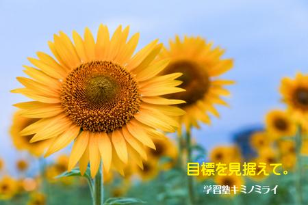 image42.jpg