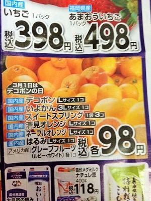 柑橘チラシ