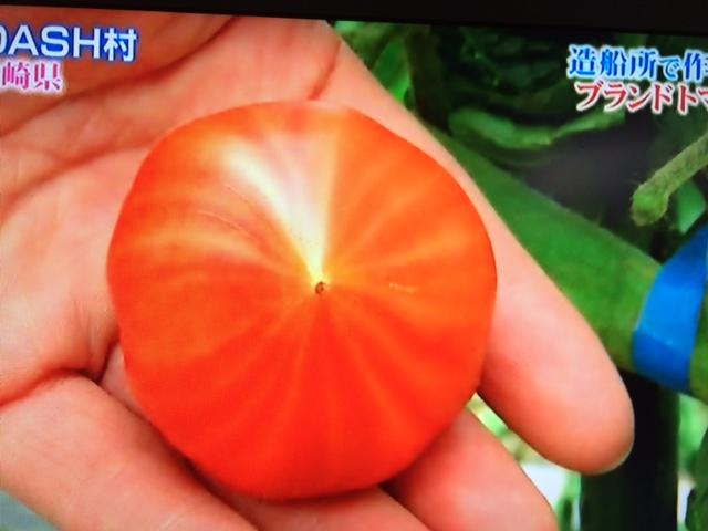 大島トマト4