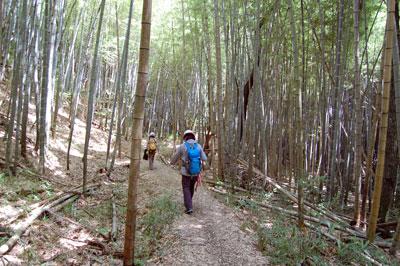 14.7.17石上大塚から竹藪