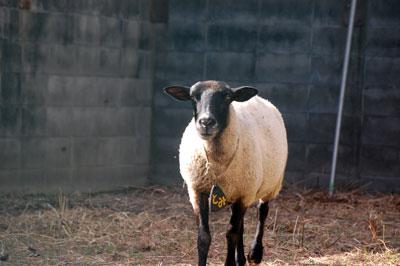 14.7.23羊とみ