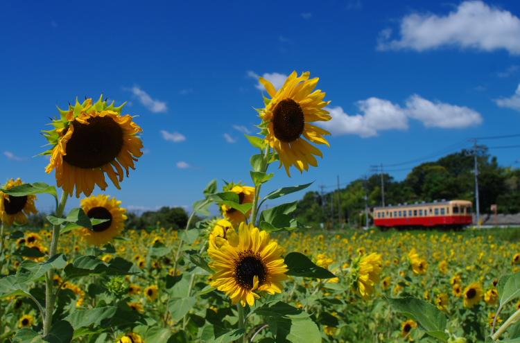2014年08月19日 京葉線 小湊 056