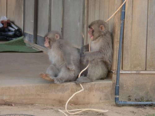 ひもで遊ぶ猿2