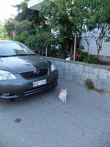 サモトラキの猫さん