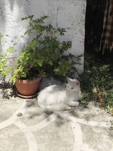サモトラキ_ホラの猫さん (1)