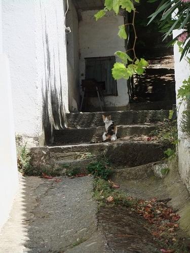 サモトラキの猫さん (5)