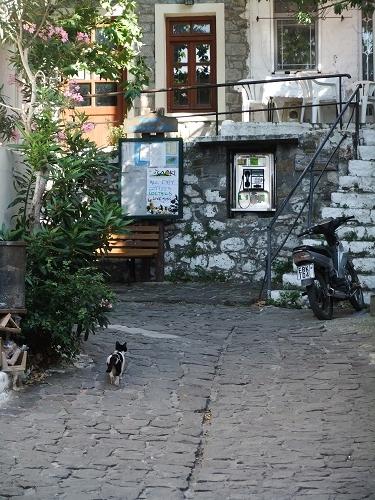 サモトラキの猫さん (4)