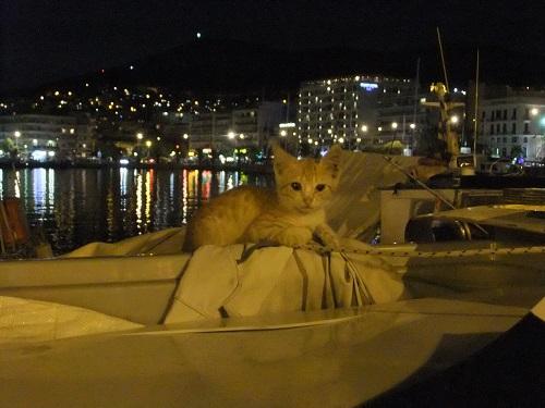 カヴァラ_夜の子猫