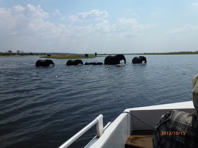 (3)-1チョベ川をボートサファリーで