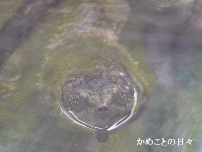 DSC_0776 kamituki