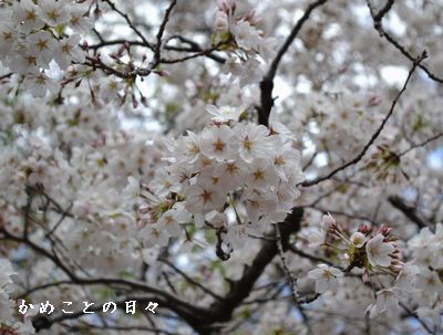 DSC_0005-saku.jpg