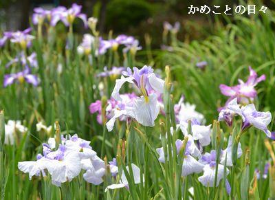DSC_0005-sho.jpg