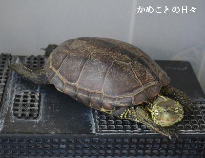 DSC_0007-suke_201406022134058ae.jpg