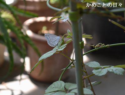 DSC_0010-bata.jpg