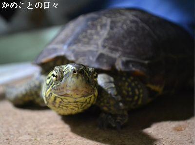 DSC_0042-suke_20140908220046124.jpg