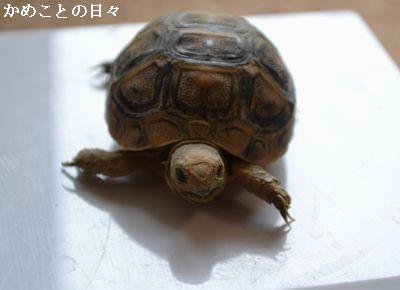 DSC_0049-ho.jpg
