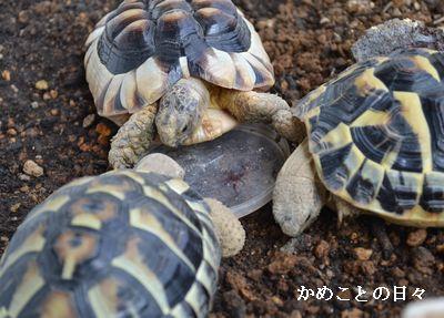 DSC_0061-riku.jpg