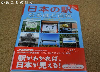 DSC_0063-kame.jpg