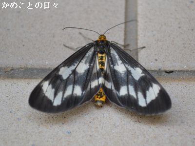 DSC_0072-ga.jpg