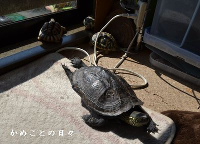 DSC_0089-rikuco.jpg
