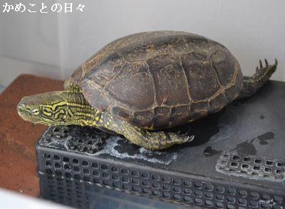 DSC_0090-suke.jpg