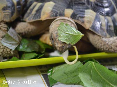 DSC_0114-fu.jpg
