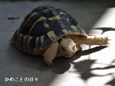 DSC_0129-qui.jpg