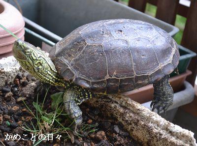 DSC_0133-suke_2014072202061261d.jpg