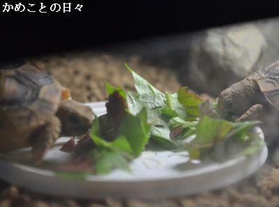 DSC_0145-hota.jpg