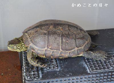 DSC_0148-suke.jpg
