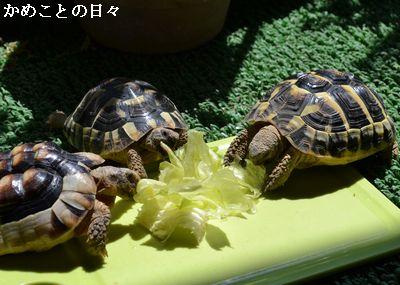 DSC_0151-riku.jpg