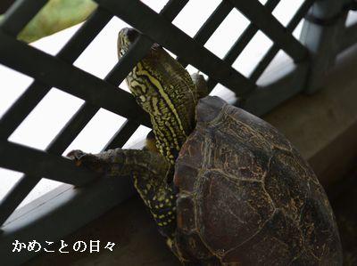 DSC_0155-suke.jpg