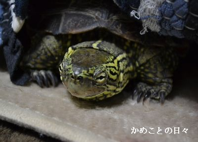 DSC_0188-suke.jpg