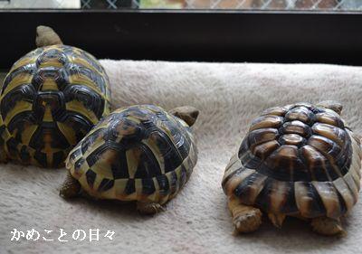 DSC_0200-riku.jpg