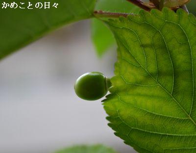 DSC_0210-app.jpg