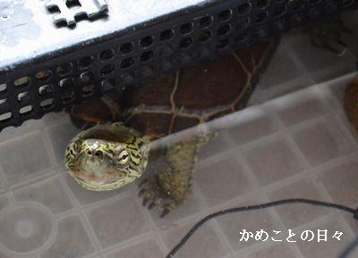 DSC_0214-suke.jpg