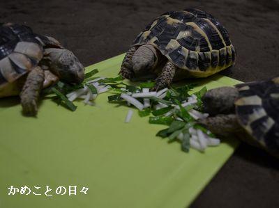 DSC_0224-riku.jpg