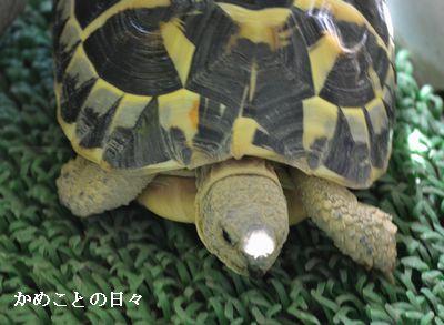 DSC_0226-fu.jpg