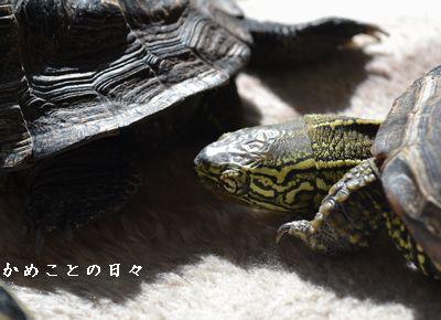DSC_0228-suke.jpg