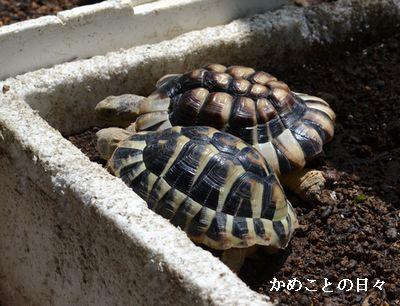 DSC_0229-qm.jpg