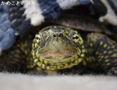 DSC_0259-suke_2014043022521648b.jpg