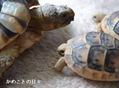 DSC_0265-mahota.jpg