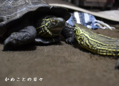 DSC_0320-sukeco.jpg