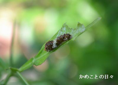 DSC_0334-age.jpg